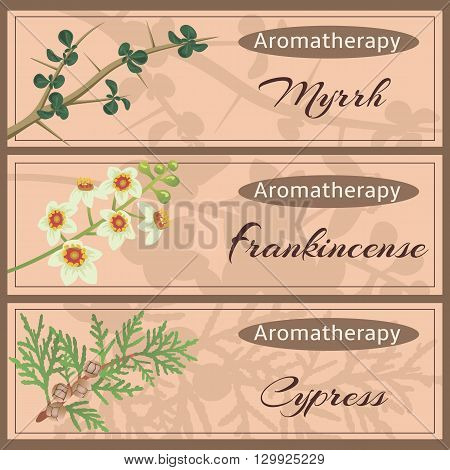 Aromatherapy set collection. Myhhr frankincense cypress banner set. Vector illustration EPS 10.