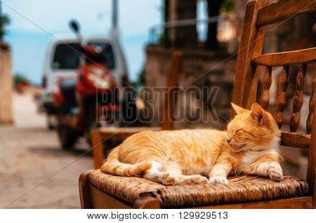 Big red ginger cat reposes outdoors on a chair in the Greek resort of Afitos Greece