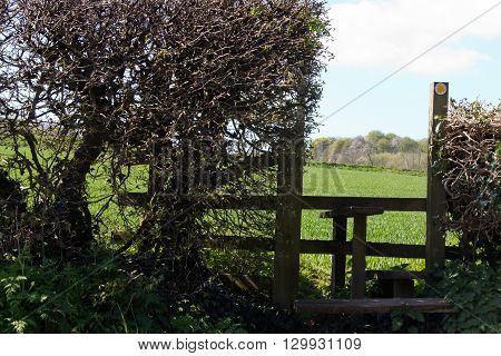 Wooden Country Stile In A Hedge Leading To Field