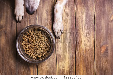 Bowl of dry kibble dog food and dog's paws and nose over grunge wooden floor