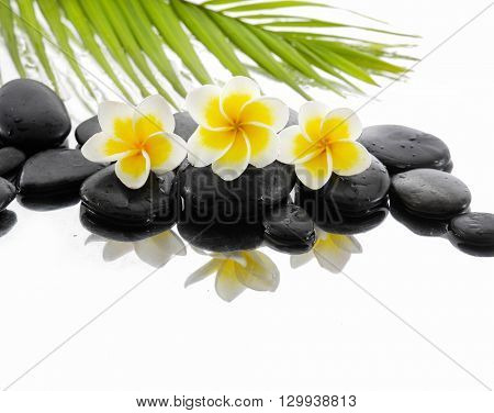 Three frangipani ,palm and black stone