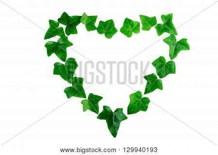 Green ivy leaves in a heart shape on white background. Flat lay.