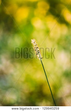 Nature Green Natural Background Of Grass. Bokeh, Boke Green Grass With Sunlight Colors