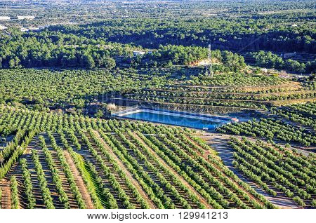 Olive Groves. Mont-roig Del Camp (spain).