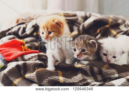 Kittens and mittens. White, Red and grey newborn kittens in a plaid blanket. Sweet adorable tiny kittens on a serenity blue wood play with cat toy and mittens. Funny kittens crawling and meowing