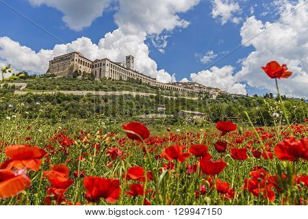 View of the city of Assisi from a field of poppies