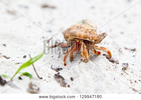 Hermit Crab On A Tropical Beach