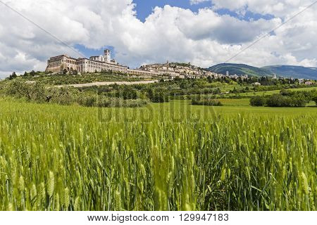 View of the city of Assisi from a cornfield.