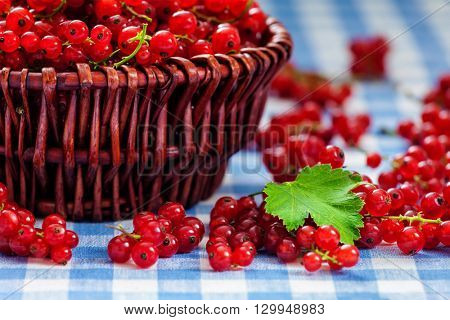 Red currant berries  in wicker bowl on kitchen table