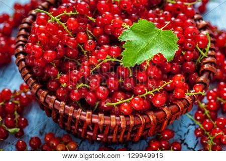 Redcurrant red currant berries  in wicker bowl on kitchen table