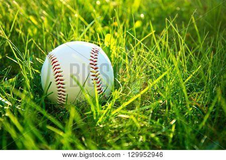 Baseball game. Baseball ball in green grass.