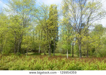Spring landscape in Pusupuisto Park of Lappeenranta Finland.