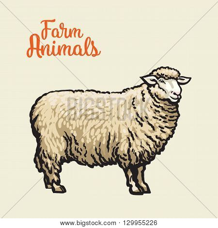 White sheep isolated, sketch drawn by hand on a light background sheep, farm animals, cloven-hoofed livestock, sheep, sheep icon with thick fur