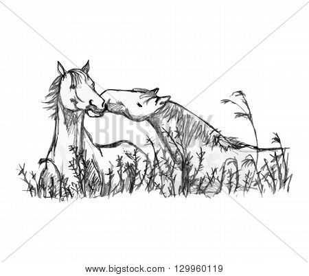 A graphic image of two horses on a white background. One horse kisses another in the tall grass. Vector illustration