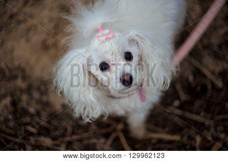 Little Dog In A Huge World