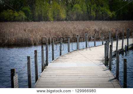 Boardwalk in the wetland during the spring