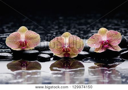 Zen stones and three orchid
