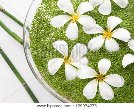 Set of frangipani with leaf in bowl of and bamboo grove