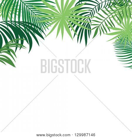 tropical background, green palm leaves, tropical banner with place for your text