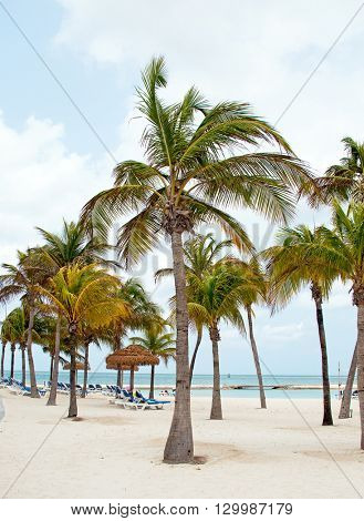 Palmtrees at the beach on Aruba island in the Caribbean Sea