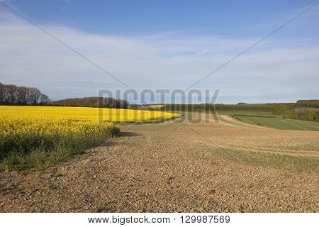 Canola Crops With Agricultural Scenery