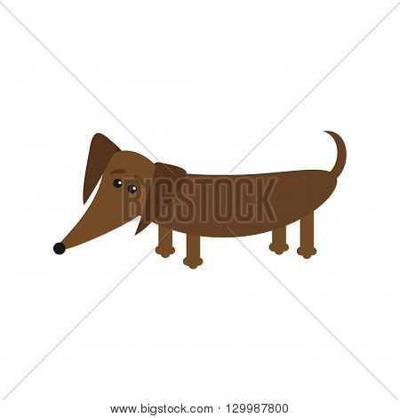 Dachshund dog breed with tongue. Cute cartoon character on white background. Isolated. Flat design Vector illustration