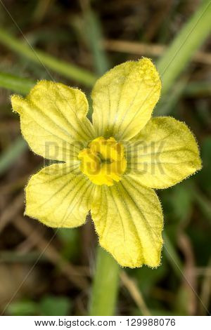 Flower Of Organic Agriculture