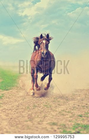 Young brown horse running on a meadow