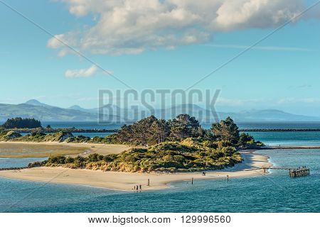 Gorse Otago Harbour entrance Dunedin Otago South Island New Zealand. The sand dune and the Aramoana mole located at the mouth of the Otago Harbor. This area is a protected Wildlife Sanctuary.