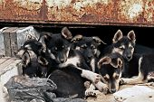 Six Homeless Puppies.