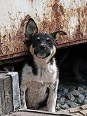 The Alert Homeless Puppy.