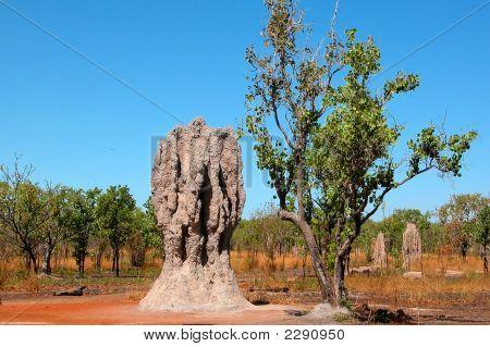 Termite Mound  Australia