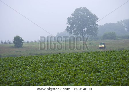 Early Morning Farm