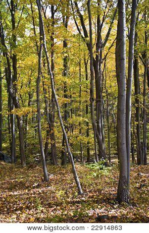 Appalachian Autumn Trees