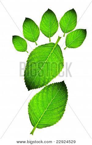 Green leaf footprint