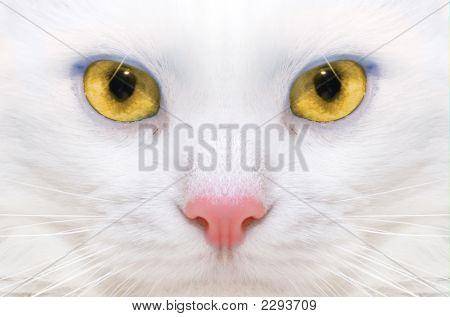 White Cat: Macro
