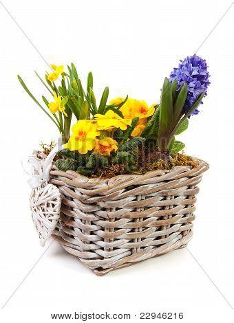 Basket Spring Flowers