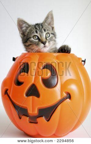 Kitty In Pumpkin