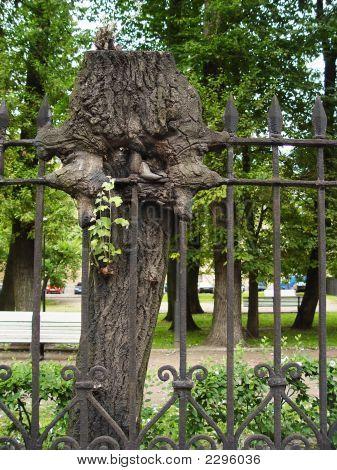 Freak Tree Into Fence