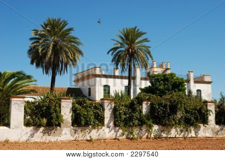 Farmhouse With Palmtrees In Spain