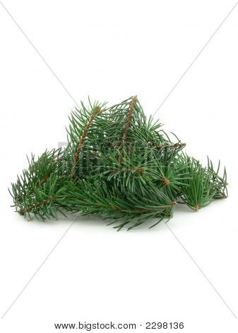 Bunch Of Pine Branches