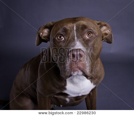 Submissive dog