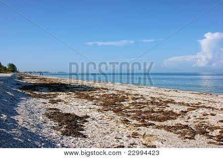 Morning On Bonita Beach