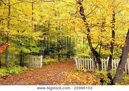 Avenue Of Yellow