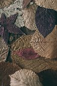 Fallen Autumn Leaves Background. Colorful  Leaves Background And Texture For Design. Close Up View O poster