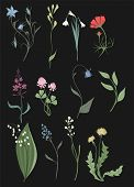 Herbs And Wild Flowers Vector Clip Art Set Of Botany Illustrations Vintage Flowes Images poster