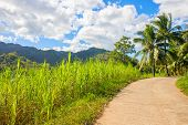 Tropical Landscape With Palm Trees And Village Road. Countryside Road In Green Tropical Forest. Empt poster