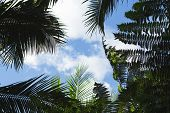 Palm Tree Leaf On Blue Sky Background. Coco Palm Tree Top Silhouette On Sky. Green Palm Leaf On Sunn poster