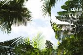 Bright Tropical Leaf On Sky Background. Coco Palm Tree Top Silhouette On Sky. Green Palm Leaf On Sun poster