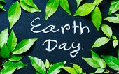 Earth Day Concept, Earth Day Word Writing On Chalkboard With Nature Green Leaves poster